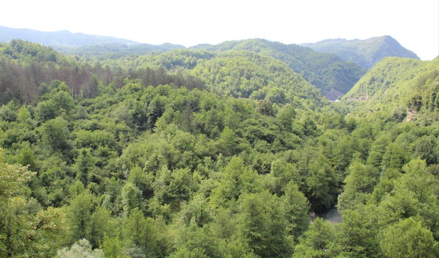 Название: Леса в Черногории.JPG Просмотры: 90  Размер: 208.3 Кб
