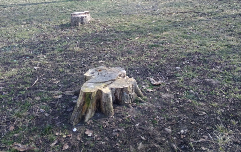 Название: Пни в парке Тирасполя.jpg Просмотры: 189  Размер: 322.9 Кб