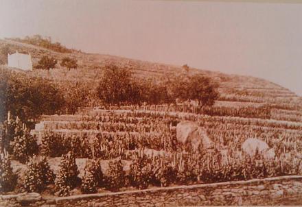 Нажмите на изображение для увеличения Название: Вид виноградника князя Витгенштецна.jpg Просмотры: 577 Размер:65.3 Кб ID:16203