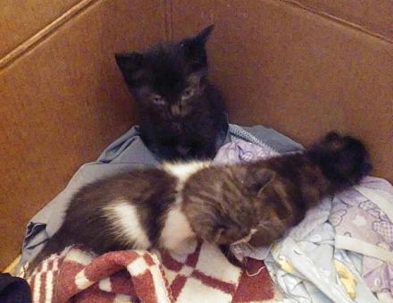 Нажмите на изображение для увеличения Название: Бездомные котята в ПМР.jpg Просмотры: 253 Размер:59.3 Кб ID:18676