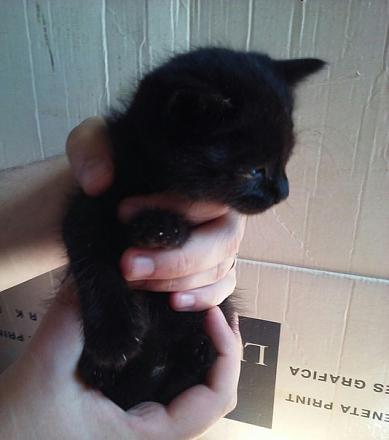 Нажмите на изображение для увеличения Название: Черный котенок.jpg Просмотры: 276 Размер:43.8 Кб ID:18678
