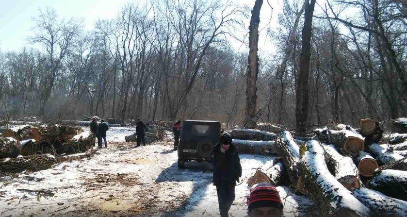 Название: Деревья в Терновке - вырубка.jpg Просмотры: 1402  Размер: 111.6 Кб