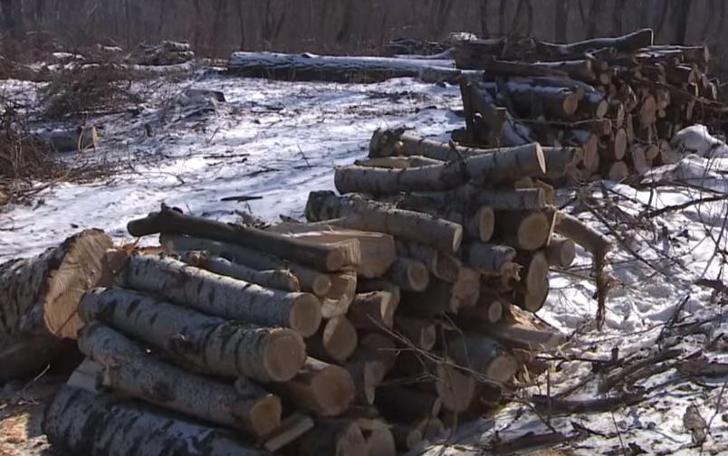 Название: Больные деревья.JPG Просмотры: 1350  Размер: 123.6 Кб