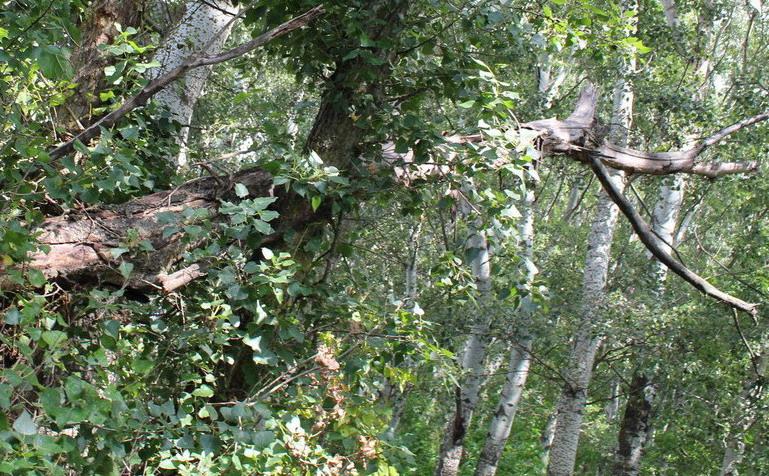 Название: Ветка опасная в лесу.JPG Просмотры: 4337  Размер: 245.3 Кб