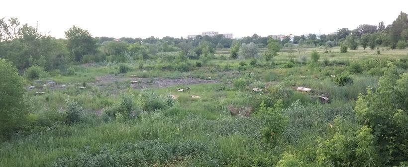 Название: Вырубка леса рядом с Тирасполем.jpg Просмотры: 334  Размер: 109.7 Кб