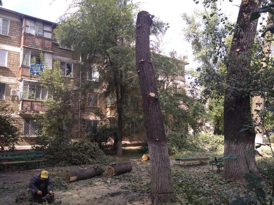 Название: Вырубка деревьев - Фортуна.jpg Просмотры: 180  Размер: 258.5 Кб