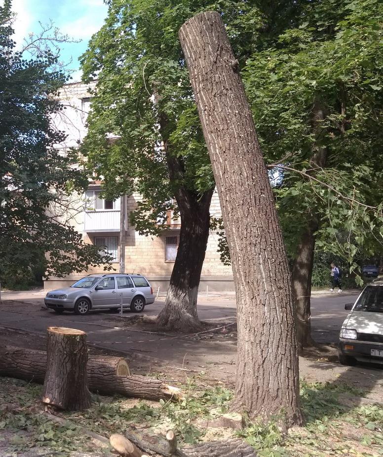 Название: Обрезанное дерево САХ.jpg Просмотры: 196  Размер: 377.3 Кб