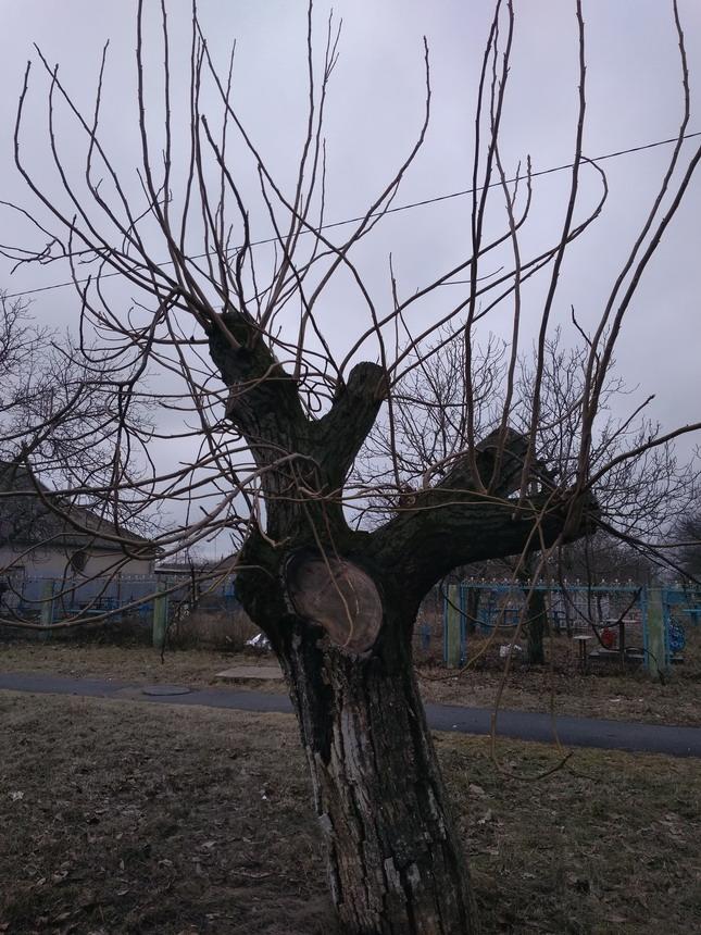 Название: Подрезка веток дерева.jpg Просмотры: 624  Размер: 210.8 Кб