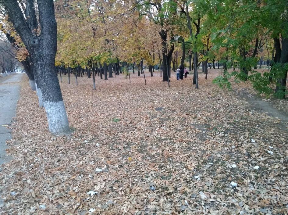 Название: Опавшие листья.jpg Просмотры: 75  Размер: 356.8 Кб