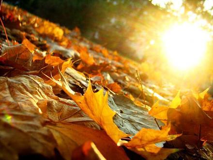 Нажмите на изображение для увеличения Название: 77801260_1315128169_63406483_1283190045_61704611_Autumn_Leaves_by_artifexa.jpg Просмотры: 418 Размер:70.0 Кб ID:7158