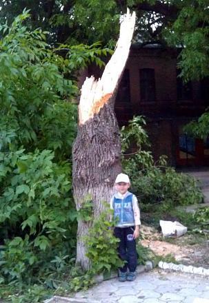Нажмите на изображение для увеличения Название: Сломанные деревья после ливня в Тирасполе.jpg Просмотры: 589 Размер:77.2 Кб ID:16125